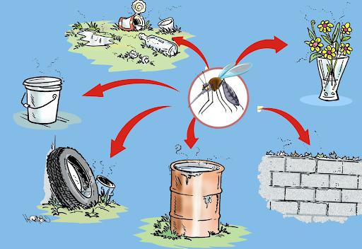 Giữ vệ sinh nhà ở, môi trường sạch sẽ là cách tốt nhất để ngăn muỗi vằn phát triển, phòng chống sốt xuất huyết