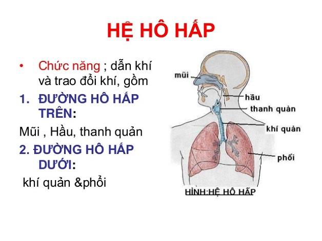 Viêm đường hô hấp trên ở trẻ - các bộ phận thuộc đường hô hấp trên