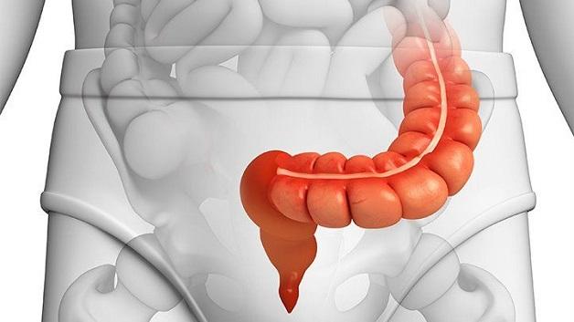 Đại tràng sigma là phần cuối cùng của ruột, nối với trực tràng