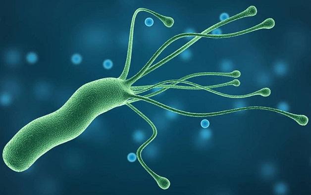 Ung thư dạ dày có dấu hiệu như thế nào - vi khuẩn HP