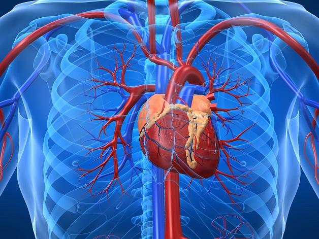 Thiểu năng mạch vành là tên gọi khác của bệnh động mạch vành.