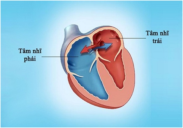 Hiện tượng xuất hiện các lỗ thủng giữa các vách ngăn liên nhĩ chiếm khoảng 5-10% các dị tật tim bẩm sinh.