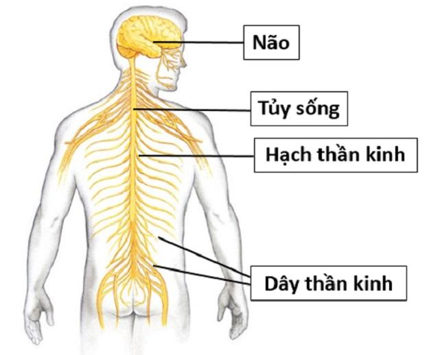 viêm dây thần kinh